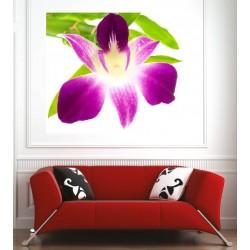Affiche poster orchidée feuille