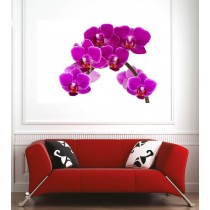 Affiche poster orchidée