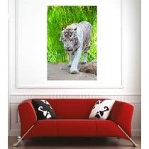 Affiche poster tigre blanc