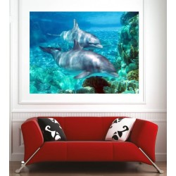 Affiche poster dauphins 20471