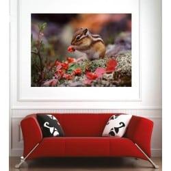 Affiche poster ecureuil 75128