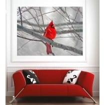 Affiche poster oiseau rouge
