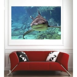 Affiche poster requin 438353