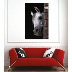 Affiche poster cheval blanc 78433
