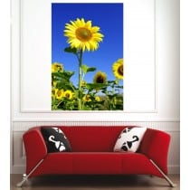 Affiche poster champ de tournesols