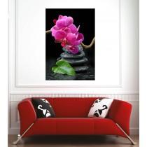Affiche poster orchidée galets