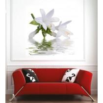Affiche poster fleur blanche