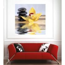 Affiche poster orchidée jaune galets