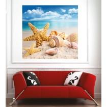 Affiche poster étoile de mer coquillages