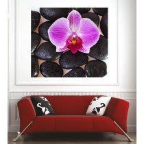 Affiche poster galets noir orchidée