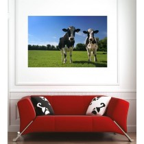Affiche poster vaches