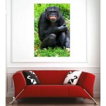 Affiche poster singe