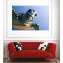 Affiche poster tortue de mer
