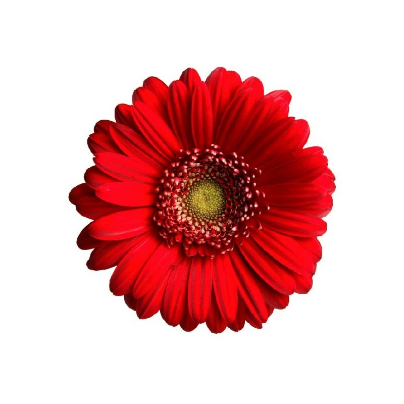 affiche poster fleur rouge art d co stickers. Black Bedroom Furniture Sets. Home Design Ideas