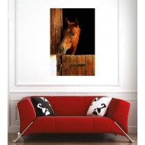 Affiche poster cheval box