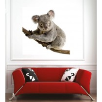 Affiche poster koala