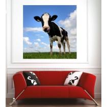 Affiche poster Vache