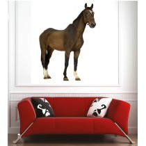 Affiche poster cheval