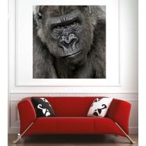 Affiche poster gorille face