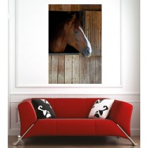 Affiche poster cheval marron box