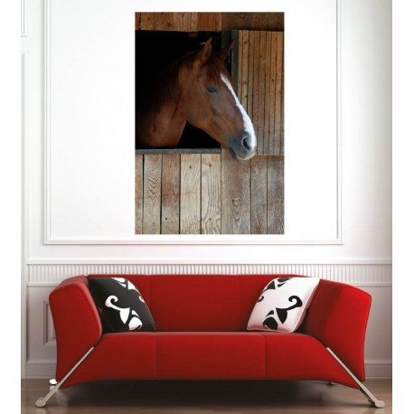 Affiche poster cheval marron box