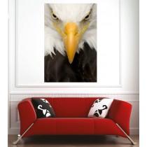 Affiche poster aigle