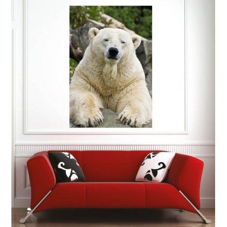 Affiche poster ours blanc