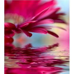 Affiche poster fleur rose sur l'eau