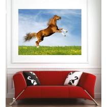 Affiche poster saut de cheval