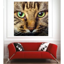 Affiche poster yeux de chat
