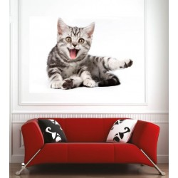 Affiche poster chaton