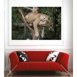 Affiche poster léopard