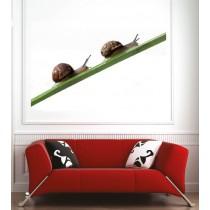Affiche poster escargots