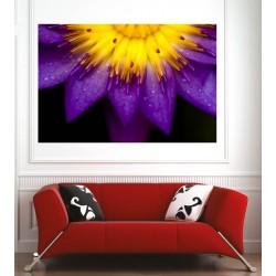 Affiche poster fleur violette
