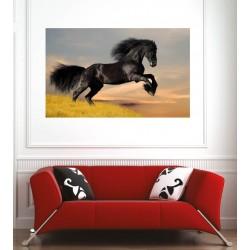Affiche poster cheval noir