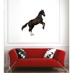 Affiche poster cheval cabré