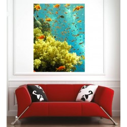 Affiche poster petits poissons