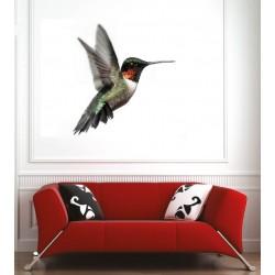 Affiche poster colibri
