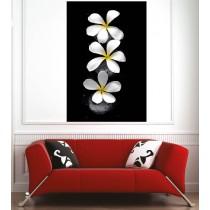 Affiche poster pétale de fleur
