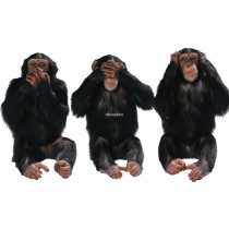 Sticker chimpanzés-expression