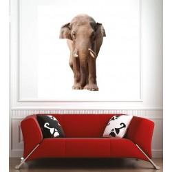 Affiche poster éléphant