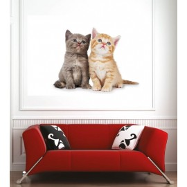 Affiche poster 2 chats