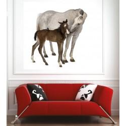Affiche poster cheval et poulain