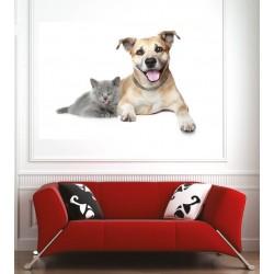 Affiche poster chat et chien