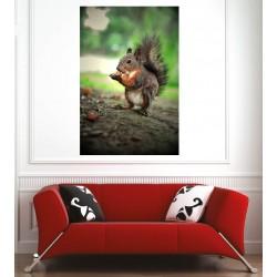Affiche poster écureuil
