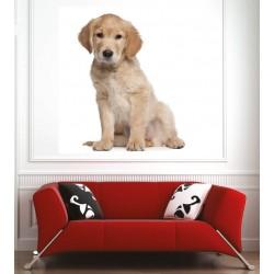 Affiche poster chien