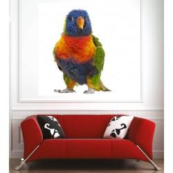 Affiche poster perroquet