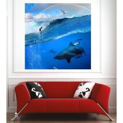 Affiche poster requin surfeur
