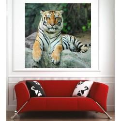 Affiche poster tigre