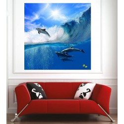 Affiche poster dauphins